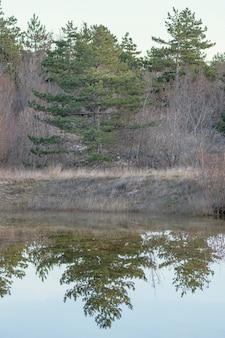Floresta refletida na água do lago