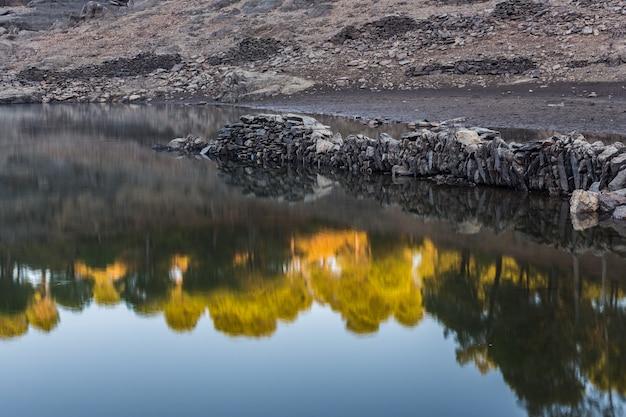 Floresta refletida na água