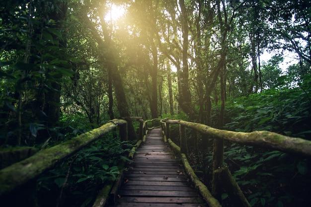 Floresta tropical bonita na trilha de natureza do ang ka no parque nacional de doi inthanon, tailândia