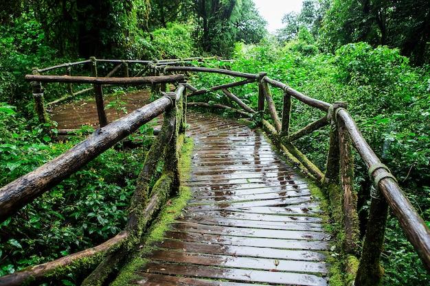 Floresta tropical bonita na trilha de natureza do ang ka no parque nacional do inthanon do doi, tailândia
