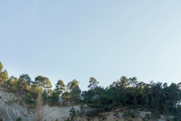 Floresta tropical capturada à luz do dia Foto gratuita