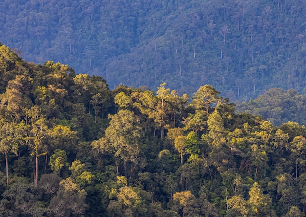 Floresta tropical com luz da manhã,