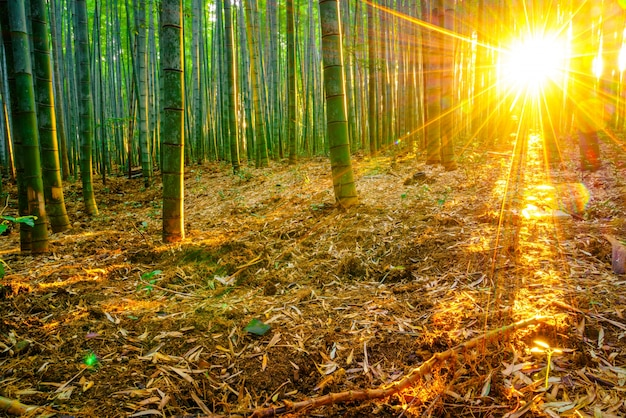 Floresta tropical crescimento ao ar livre vitalidade japonês