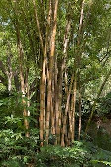 Floresta tropical de bambu à luz do dia