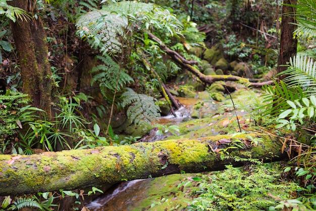 Floresta tropical de bornéu malásia