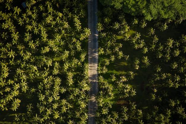 Floresta tropical de coqueiros