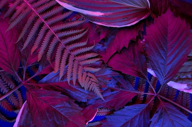 Floresta tropical de folhas brilhando na luz negra