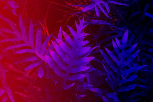 Floresta tropical de folhas brilhando no fundo escuro de luz alto contraste