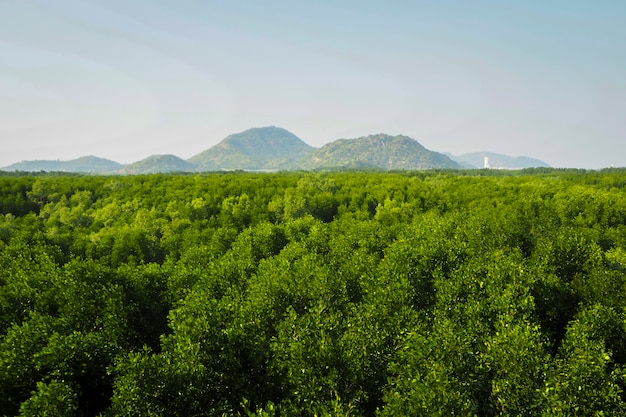 Floresta tropical de mangue na ásia