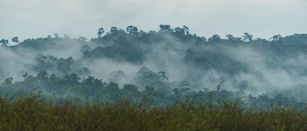 Floresta tropical densa, camadas de árvores com dossel e montanhas, conceito de liberdade e spa