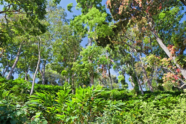 Floresta tropical profunda