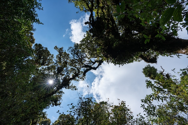 Floresta tropical, selva verde paisagem