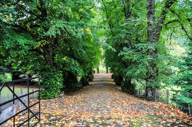 Floresta úmida escócia