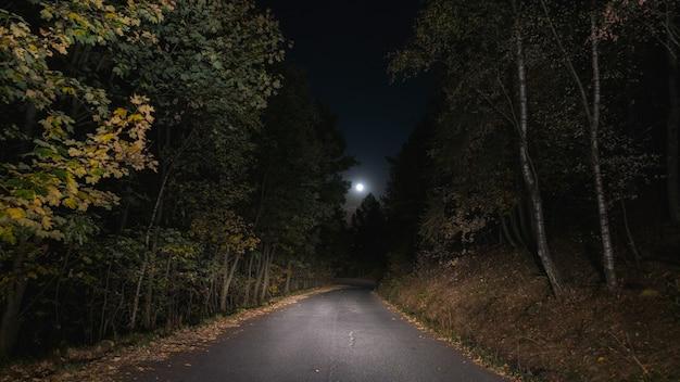 Floresta vazia do pinheiro do cruzamento de estrada iluminada pela lua. solidão e medo.