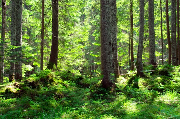 Floresta verde, árvores