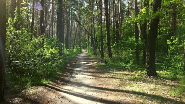 Floresta verde brilhante. árvores, arbustos, galhos com folhas verdes e grama verde