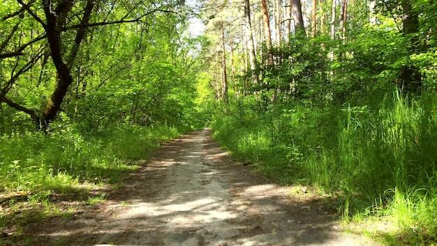 Floresta verde brilhante e trilha suja da estrada. árvores, arbustos, folhas verdes, close-up da grama verde. manhã ensolarada com raios de sol brilhantes. fundo natural, ambiente natural. proteção ecológica