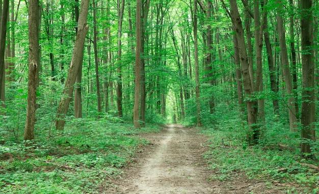 Floresta verde com árvores