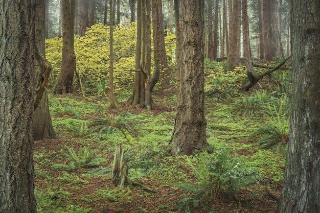 Floresta verde com grandes árvores