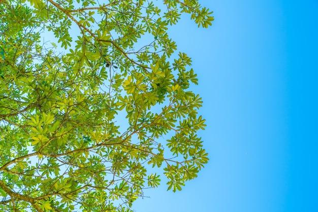 Floresta verde com luz solar.
