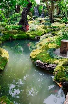 Floresta verde e córrego