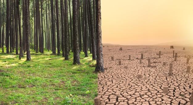 Floresta verde e terra seca com árvore cortada