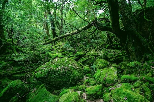 Floresta verde hipnotizante cheia de diferentes tipos de plantas únicas em yakushima, japão
