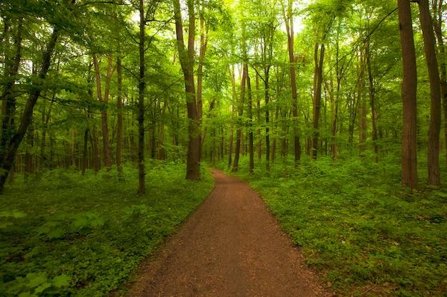 Floresta verde linda manhã