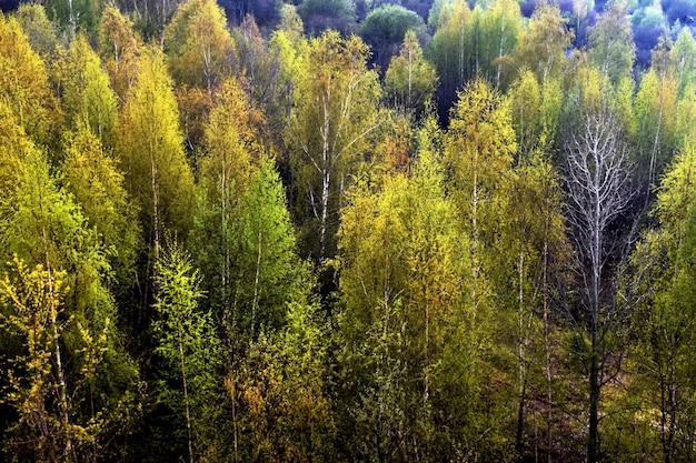 Floresta verde. vista de cima