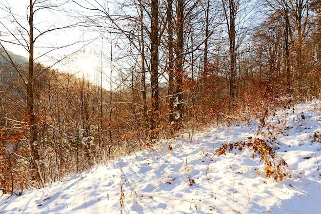Floresta vermelha e amarela com neve em sinaia