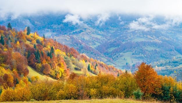 Florestas densas e coloridas nas montanhas verdes quentes dos cárpatos cobertas por uma espessa névoa cinza
