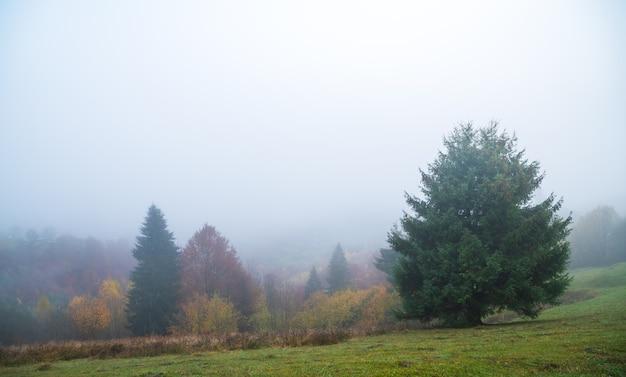 Florestas densas e coloridas nas quentes montanhas verdes dos cárpatos, cobertas por uma espessa névoa cinza
