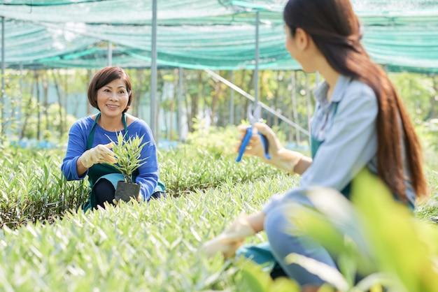 Florista com planta em estufa