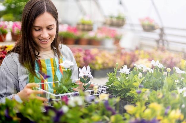 Florista de avental trabalhando com plantas florais em uma estufa coletando canteiros de flores