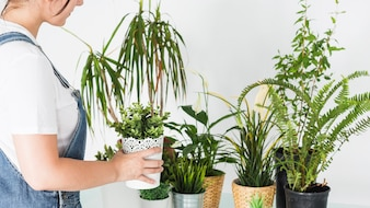 Florista feminina organizando vasos de plantas na loja