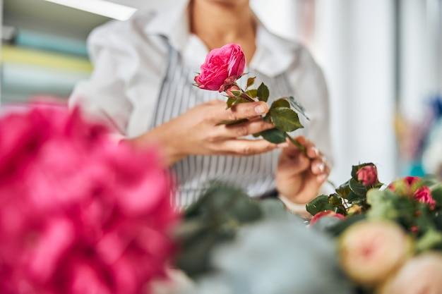 Florista habilidosa colhendo uma linda rosa