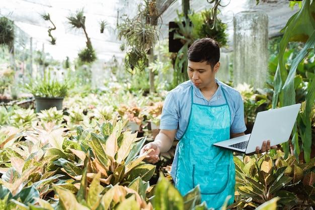 Florista inspeciona qualidade e crescimento da planta verde