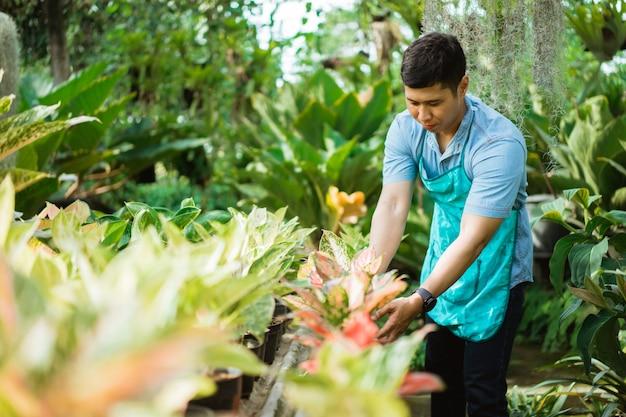 Florista masculina trabalhando no jardim