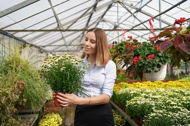 Florista sorridente e feliz em seu berçário, segurando vasos de crisântemos nas mãos enquanto cuida das plantas de jardim na estufa
