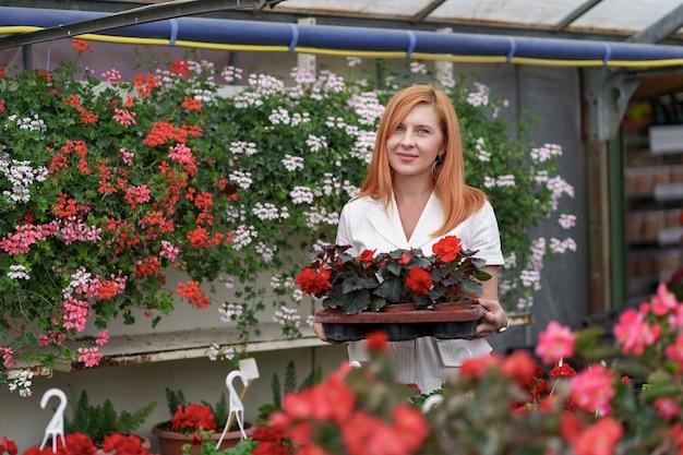 Florista sorridente e feliz em seu viveiro de pé segurando um vaso de gerânios vermelhos nas mãos enquanto cuida das plantas do jardim na estufa