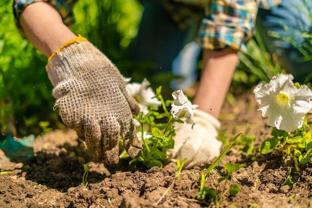 Floristas com as mãos nas luvas plantam uma flor jovem e brilhante no jardim no campo