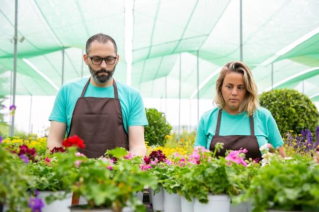 Floristas concentrados trabalhando com flores em vasos em estufa
