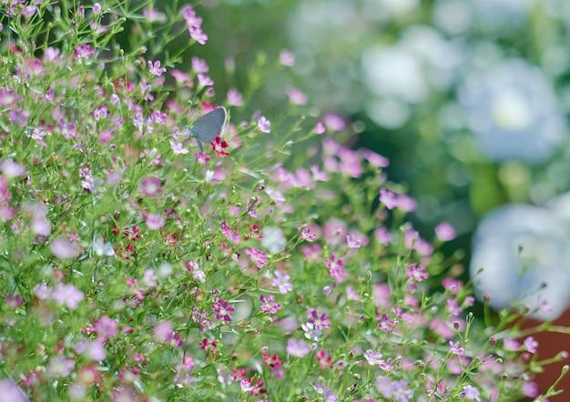 Florzinha florescendo na temporada de primavera