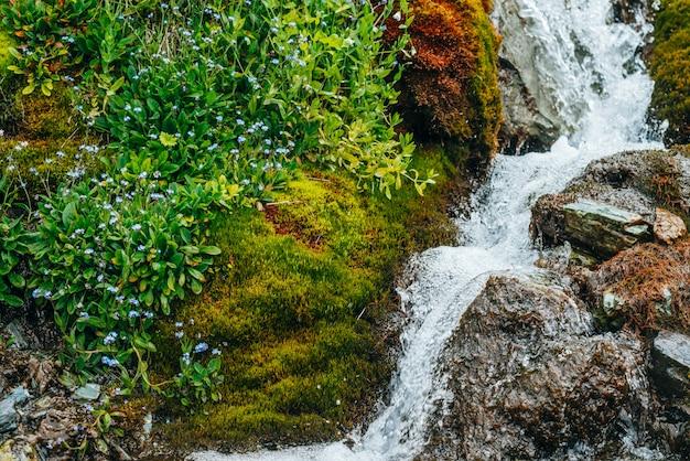 Fluxo de água da nascente entre musgo espesso e vegetação exuberante