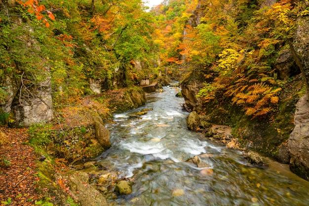 Fluxo de córrego natural que passa o penhasco da rocha com a folha colorida bonita da estação do outono no desfiladeiro de naruko, miyagi prefecture, japão.