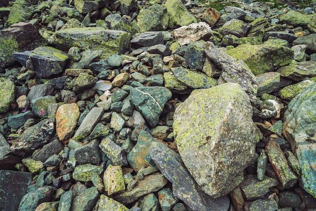 Fluxo de pedregulhos multicoloridos. pedra solta perto acima. flor rosa entre pedras aleatoriamente. incríveis pedregulhos das montanhas com musgos e líquenes. textura natural do terreno da montanha.
