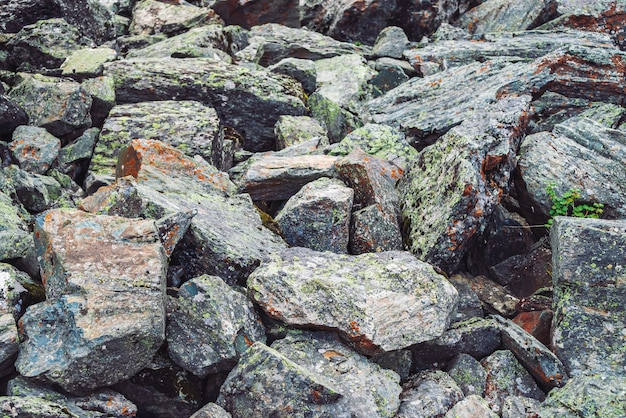 Fluxo de pedregulhos multicoloridos. pedra solta perto acima. plantas entre pedras espalhadas aleatoriamente. fundo detalhado surpreendente de pedregulhos das montanhas com musgos e líquenes. textura natural do terreno da montanha