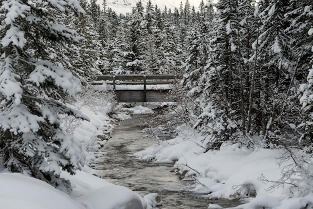 Fluxo, fluir, em, nevado, floresta, lago louise, parque nacional banff, alberta, canadá