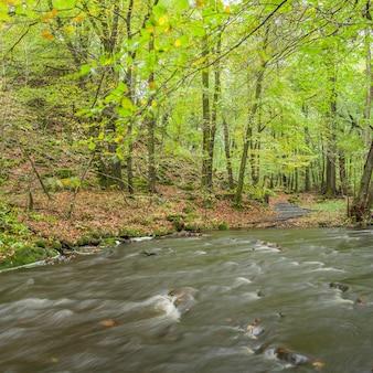 Fluxo lento na floresta verde durante o verão na suécia.