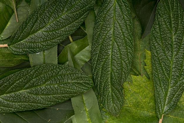 Focada variedade verde de folhas de fundo